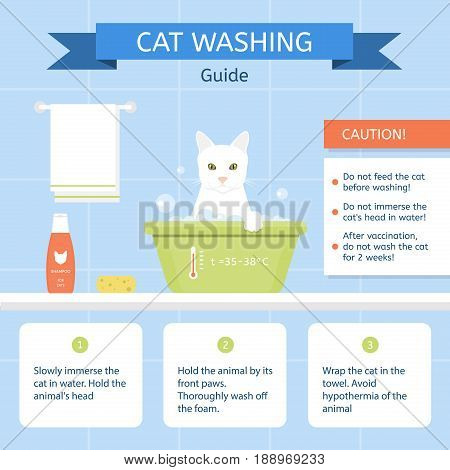 A cat sits in a washbowl on the blue background. Instructions for cleaning animals. Infographics. Vector illustration