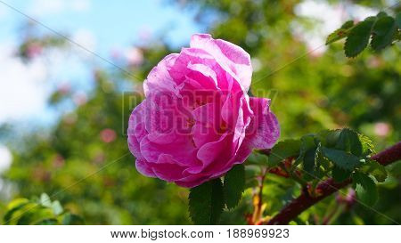 A picture of nature with flowers. Which may be more representative of nature than a flower. The colors of the flower. The smell of flowers feels in every picture