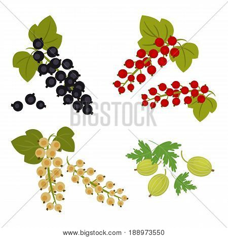 Currant and gooseberry isolated on a white background. There are berries of black, red and white currants in the picture. Vector illustration.