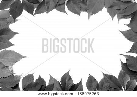 Black And White Leaves Frame Isolated On White Background