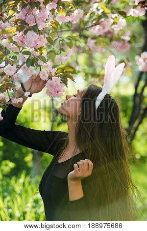 girl with rosy bunny ears smelling blossoming sakura flowers in spring park. Easter. Springtime