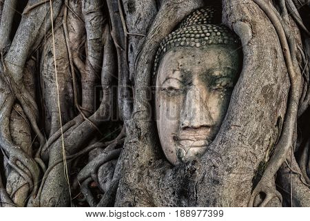 Ancient Stone Head Buddha Statue in tree roots at Ayuttaya Thailand.