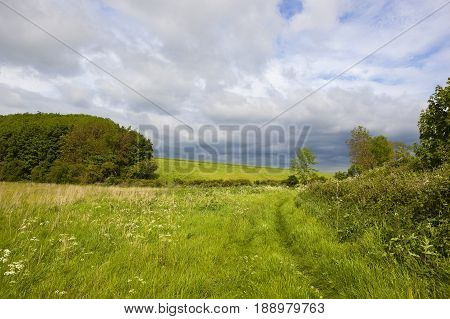 Woodland And Meadows