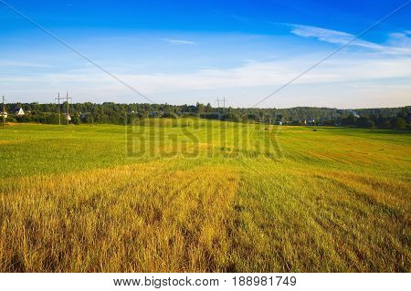 Sunny summer day in the countryside. Field of green grass and cloudless blue sky.