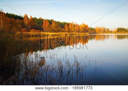 Sunny autumn landscape. Lake cloudless blue sky trees and shrubs with yellowed golden foliage on the shore.