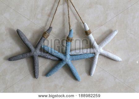 Starfish / Starfish hang on the wall .
