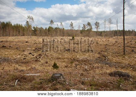 A big area of land where used to be a forest