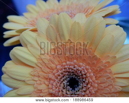 Detail Of A Beautiful Yellow Flower