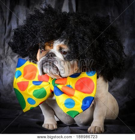 dog wearing clown wig and bowtie