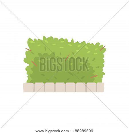 Green shrub fence, urban infrastructure element vector Illustration isolated on a white background