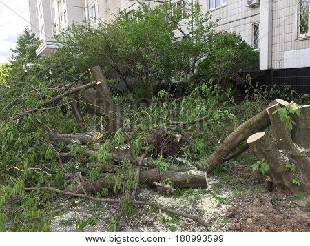 Moscow Russia - May 30 2017: Aftermath of the hurricane in Moscow. Authorities started to cut fallen trees in Babushkinskiy district Moscow.