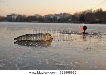 tackle winter fishing, pike, sunset, pike catching
