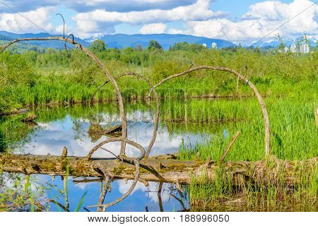 Beautiful Mountain Pond at the Burnaby Lake Park. Vancouver, British Columbia, Canada.