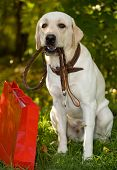 Dog with a package in park poster