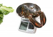 A raw lobster being weighed on a scale over white poster