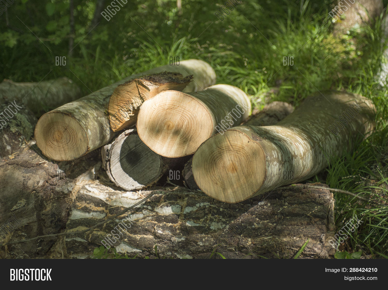 Close Wood Logs Dle Image Photo
