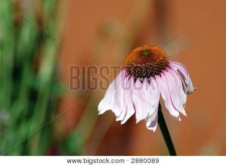 Droopy Flower
