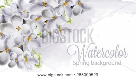 Dpring Hydrangea Flowers Vector. Romantic Floral Idelicate Decoration. Women Day, Valentines Day, Sa
