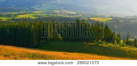 Forest. Panoramic Landscape With Evergreen Conifer Forest