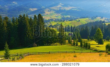 Summer Countryside. View Of Conifer Forest In High Summer