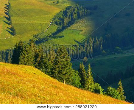 Woodland. View Of Mountain Conifer Forest In The Morning