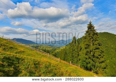 Autumn Countryside. Alpine Pasture Near Conifer Forest In Highland