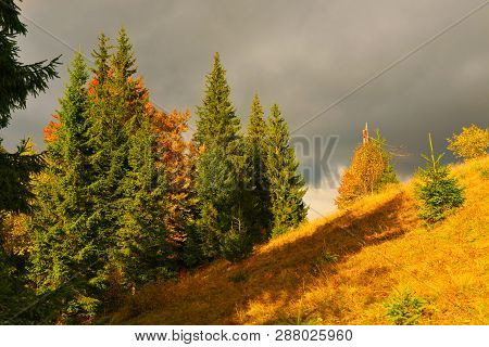 View Of Evergreen Conifer Forest In Autumn Highland