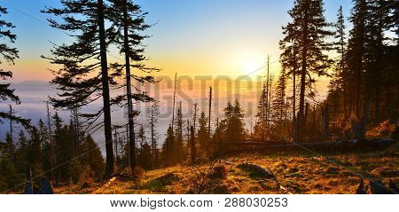 Sunrise Forest. View Of Mountain Forest With Rising Sun.landscape With Conifer Evergreen Forest In S
