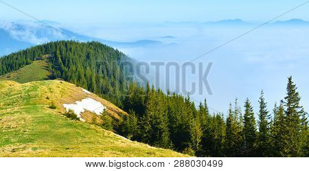View Of Mountain Conifer Forest In Spring