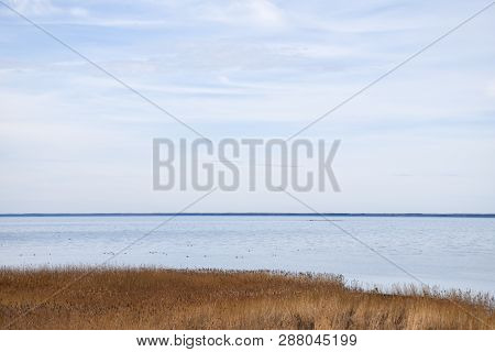 Seascape With Reeds By The Coast Of The Swedish Island Oland In The Baltic Sea