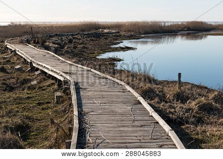 Wooden Footbridge Through The Reeds By Early Spring Season At The Swedish Island Oland