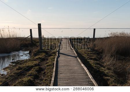 Wooden Footbridge Through The Reeds To The Coast By Early Spring Season At The Swedish Island Oland