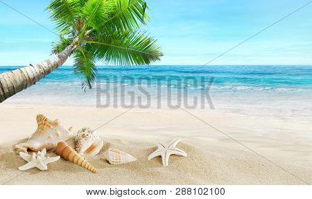 Shells on the beach. Tropical sea. Coconut palm.