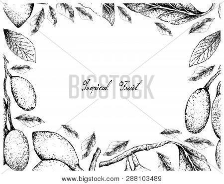 Tropical Fruit, Illustration Frame Of Hand Drawn Sketch Of Fresh Elaeocarpus Hygrophilus Curriola Or