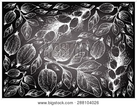 Tropical Fruit, Illustration Background Of Hand Drawn Sketch Gardenia Erubescens And Barringtonia Ed
