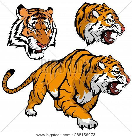 Bengal Tiger Set Suitable As Logo For Team Mascot, Royal Tiger Drawing Sketch In Full Growth, Tiger
