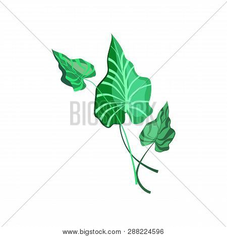 Green Leaves Of Tropical Plant Illustration. Nature, Flora, Summer. Nature Plants Concept. Vector Il