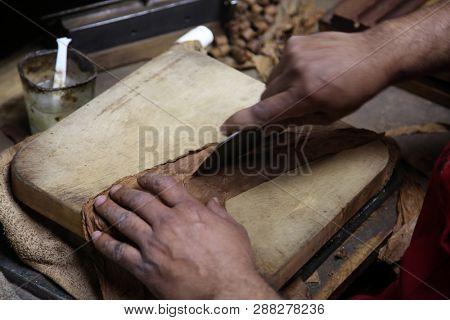 Hand Rolled Cigar. Master Craftsman making hand rolled cigar. Close up of High End Cigar Manufacturing process.