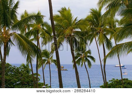 Row Of Palm Trees And View Of Ocean And Boats On Kona Bay, Hawaii
