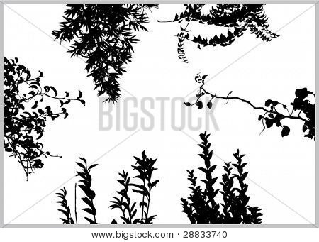 vector plants for border decoration