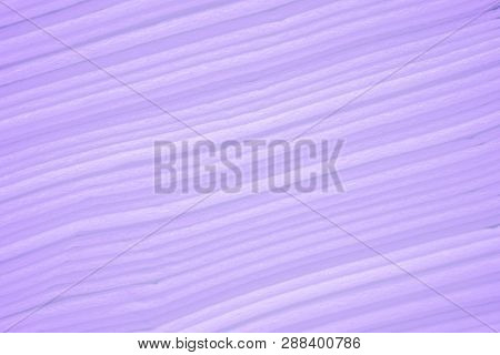 Beautiful Of Line Gradient Purple Pastel Color Abstract Background Of Paper Texture. Contemporary Ar