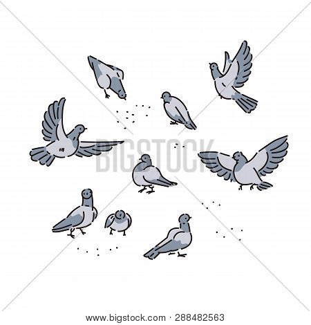 Flock Of Urban Wild Pigeons Pecks Seeds. Vector Line Art Set Of Illustrations Flying And Sitting Bir