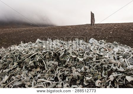 Mystical Place On The Coast Of Svalbard With Bones Of Beluga Whales On An Old Whaling Station. Hundr