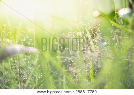 Close Up Beautiful View Of Nature Green Grass On Blurred Greenery Tree Background With Sunlight In P