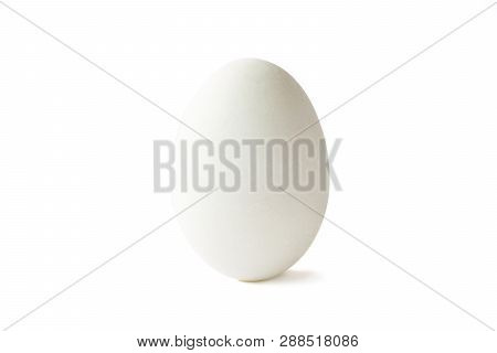 Isolated Of White Duck Egg On White Background.-image.