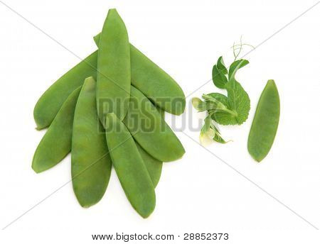 Mange tout snow pea pods with flower and leaf sprigs isolated over white background.