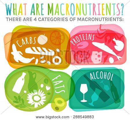 Main Food Groups - Macronutrients. Carbohydrates, Fats, Proteins, Alcohol In Comparison. Dieting, He