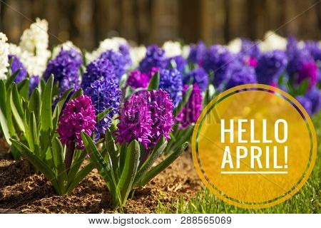 Banner Hello April. Hi Spring. Hello April. Welcome Card We Are Waiting For The New Spring Month. Th