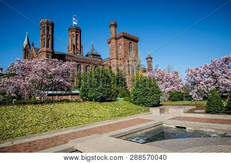 Washington Dc - May 1, 2018: Flowering Magnolia Blossom Trees Frame The Smithsonian Castle On The Na