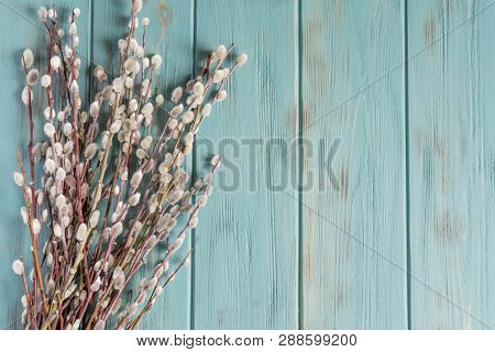 Background With Willow Branches And Buds. Spring Banner With Willow Branches. Congratulatory Backgro